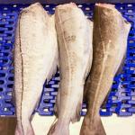 Identificación de especies de peces