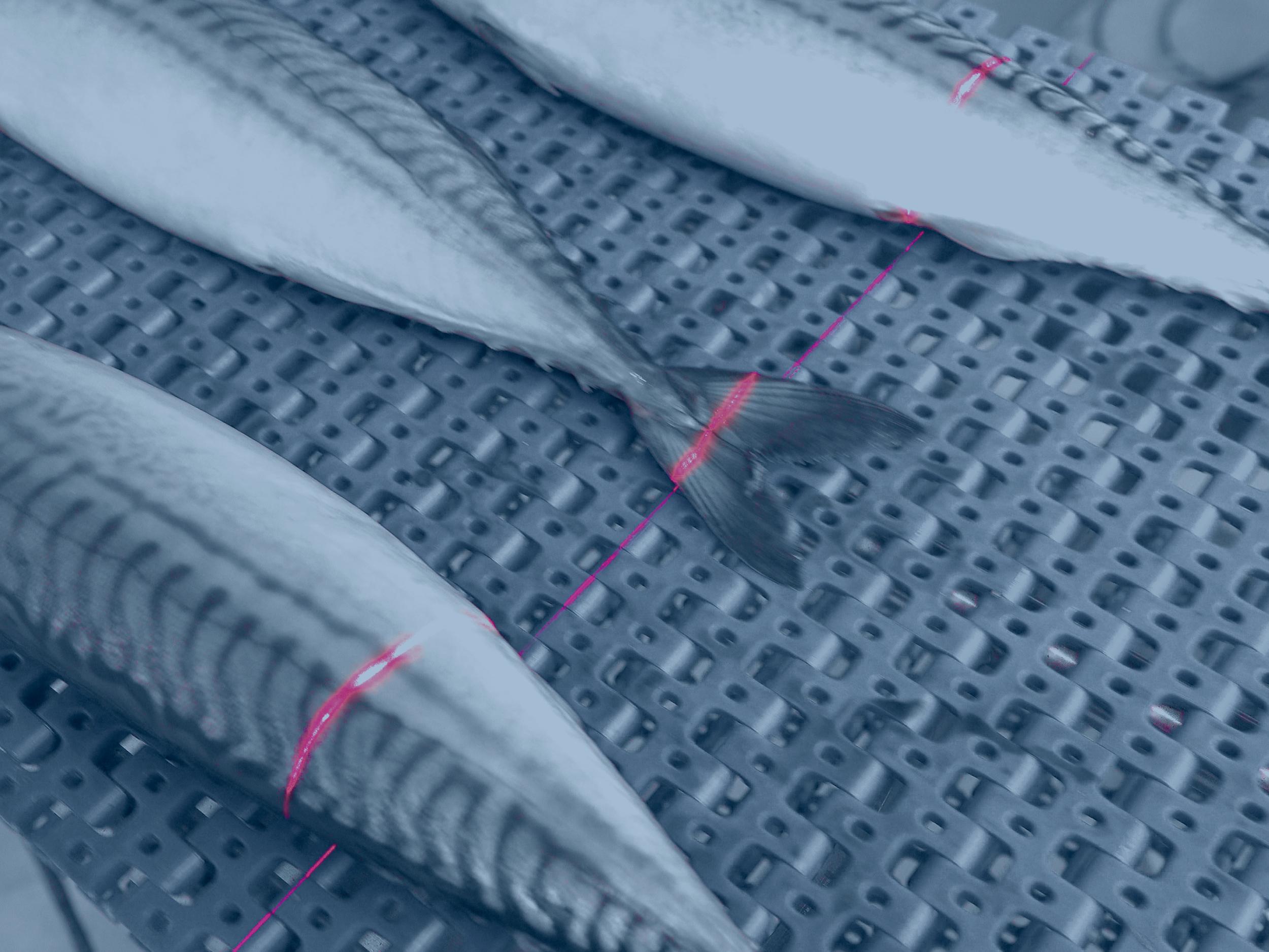 Visión-artificial-peces-laser